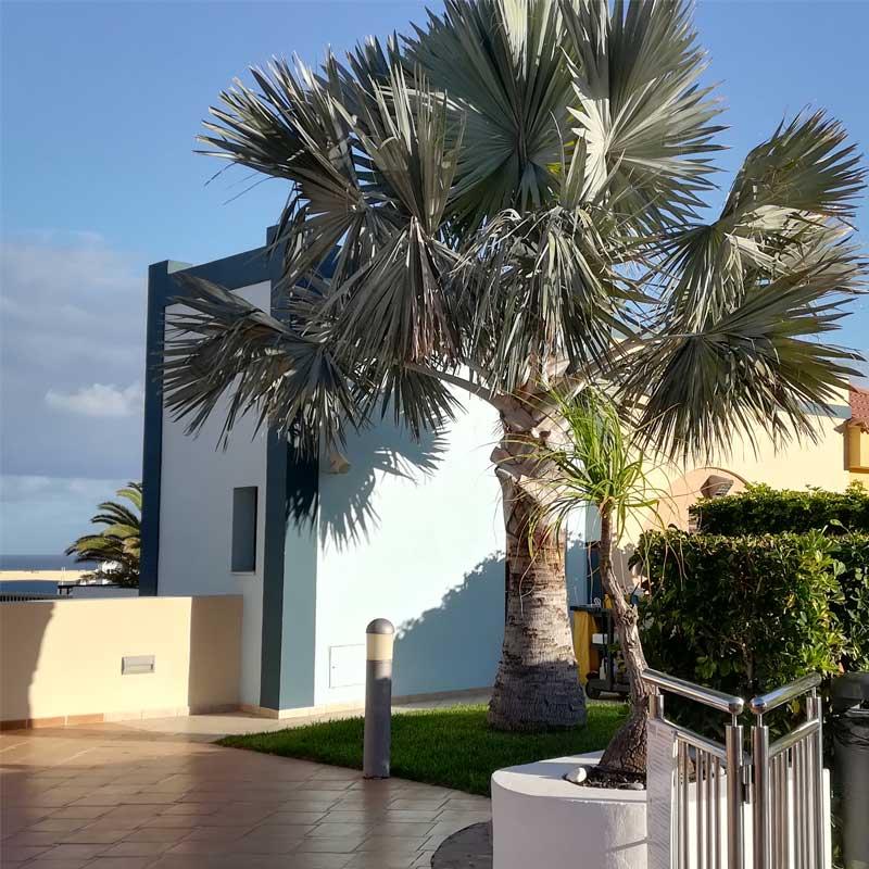Palmen im Hotel Luz del Mar