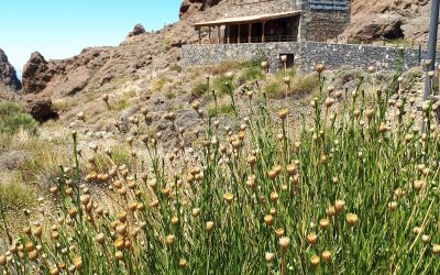 Wanderung El Cedro Teide National-Park