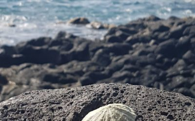Wanderung Palm-Mar
