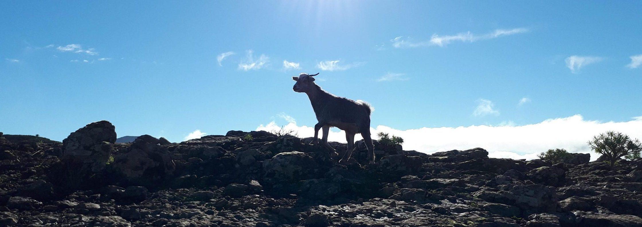 Wandern la Gomera