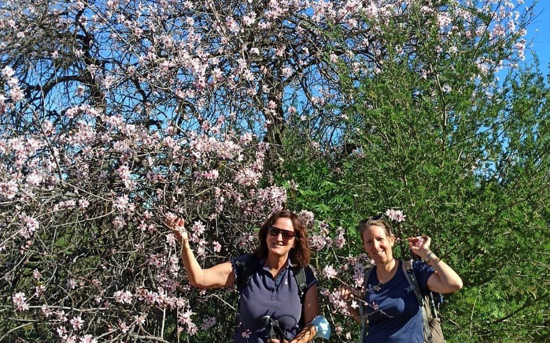 Mandelblütenwanderung