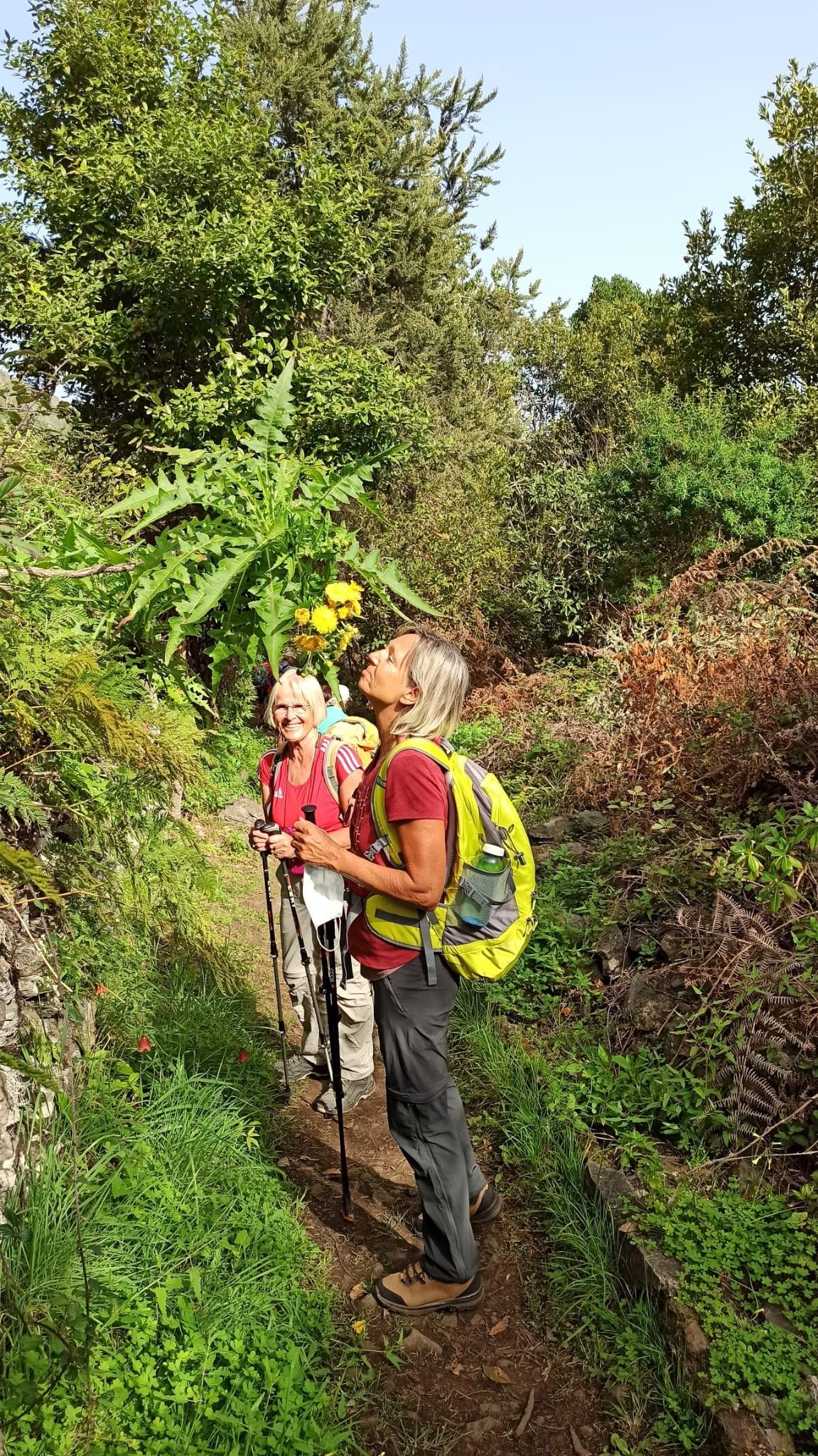 Wanderung Erjos - Los Silos