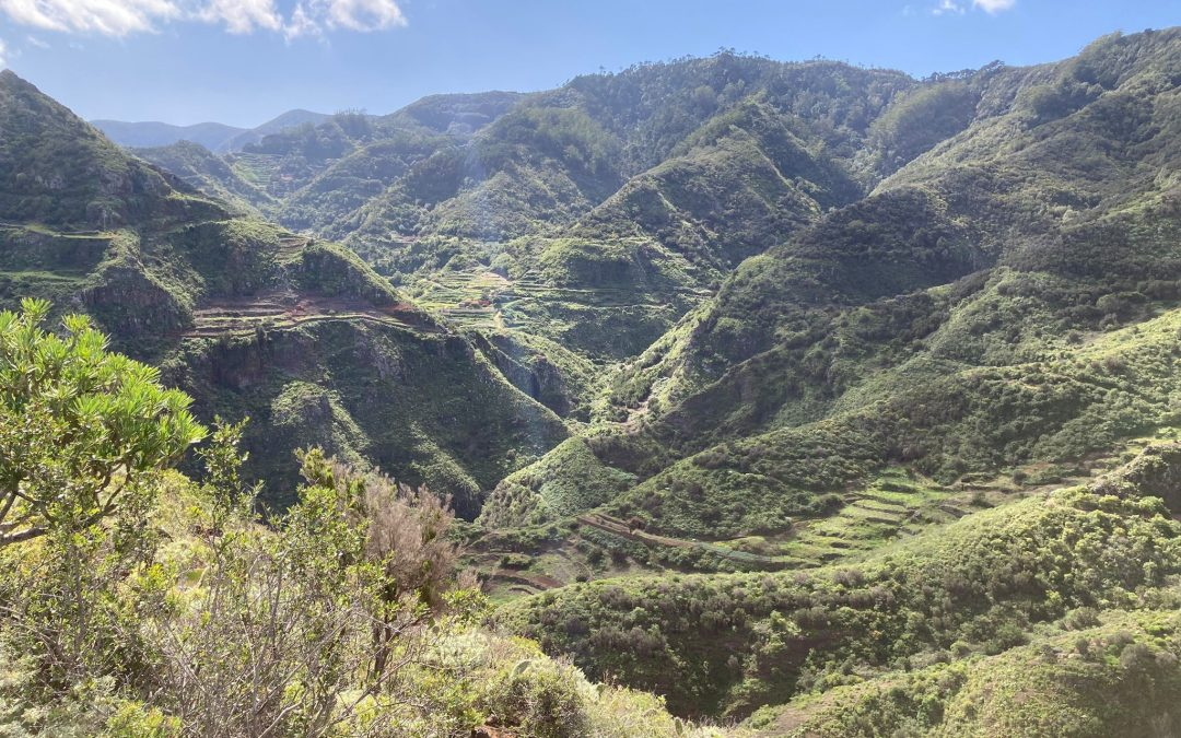 Wanderung Punta del Hidalgo-Batán