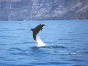 Delfintour von Los Gigantes